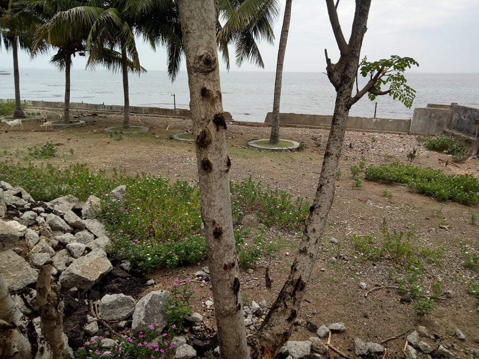 Beach lot in Catmon Cebu